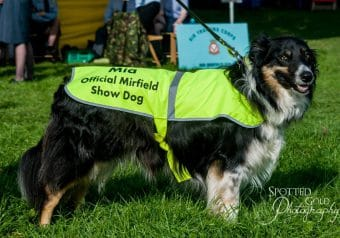 Mirfield Show 2017 - guide dog in hi-vis vest