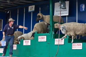 The Sheep Show will be at the Mirfield Show 2018