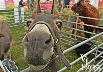Animal Corner - Donkey