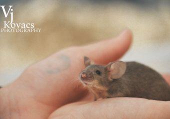 Animal Corner - Mouse